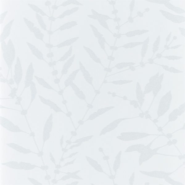 Anthozoa Wallpapers - Chaconia Shimmer Pearl