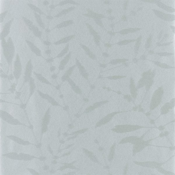 Anthozoa Wallpapers - Charconia Shimmer Slate