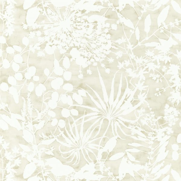 Anthozoa Wallpapers - Coralline Pebble