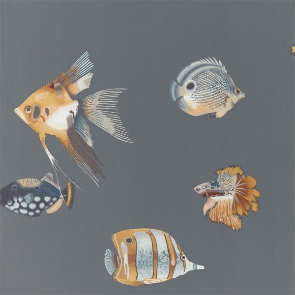 Anthozoa Wallpapers - Kamanu Amber/Slate