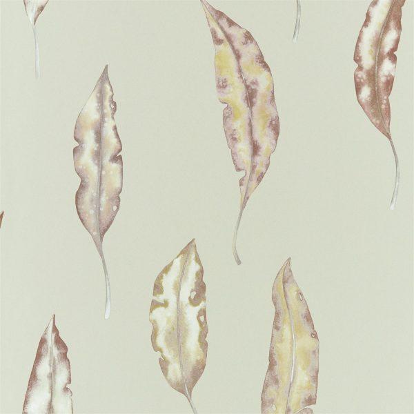 Anthozoa Wallpapers - Kinina Mandarin/Fig